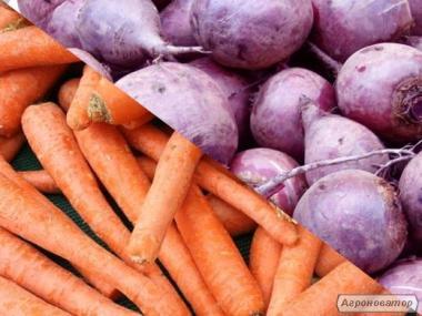 Продам морковь и свеклу собственного производства.