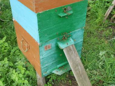 Продам мед і забрус оптом з власної пасіки