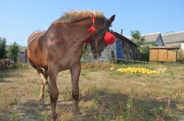 Продам лошака ваговоза