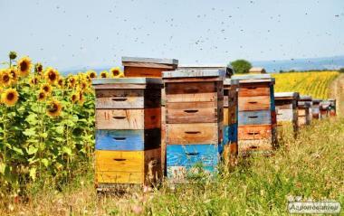 Продам пчелосемьи.
