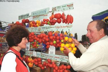 Продам рассаду помидоров, перца, капусты