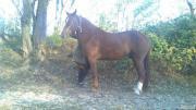 Продается рабочий конь