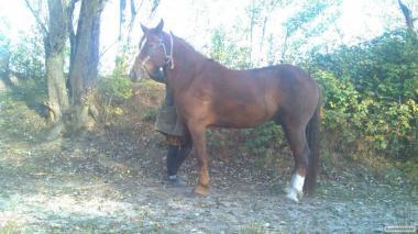 Продається робочий кінь