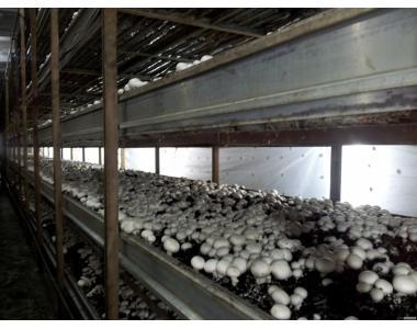 Продам грибной бизнес.