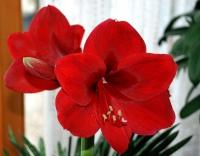 Декоративні квіти і рослини