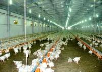 Обладнання для тваринництва