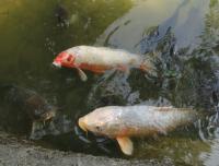 Живая рыба и зарыбок