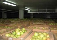 Овочесховища